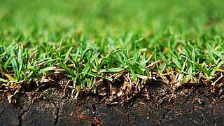 Gegen Pestizide: DFB veröffentlicht Leitlinien zum integrierten Pflanzenschutz